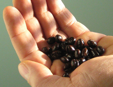 The best coffee beans?