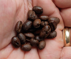 Peaberry Blue Mountain coffee beans