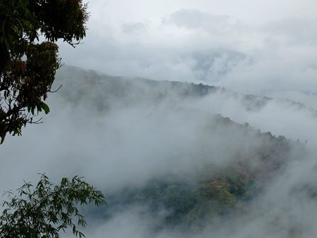 Mist and cloud in Jamaica's Blue Mountains