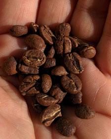 Guatemala La Esperanza coffee beans.