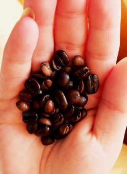 Mocha Java coffee beans.