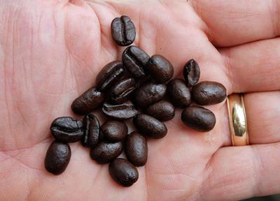 Roasted coffee beans, ready for grinding and brewing.
