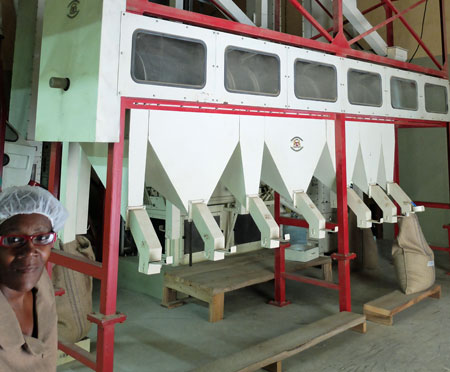 A coffee grader, which separated coffee beans by size.