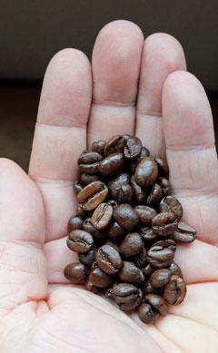 Costa Rica coffee beans.