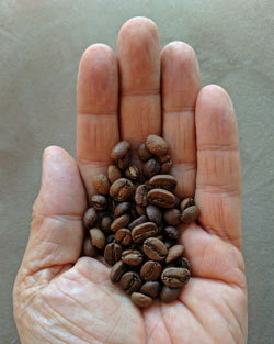 Medium roast coffee beans from Guatemala