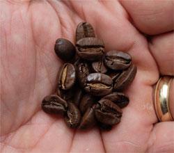 Medium roast coffee beans